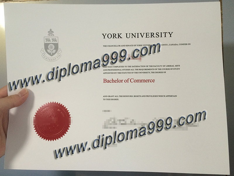 York University fake degree